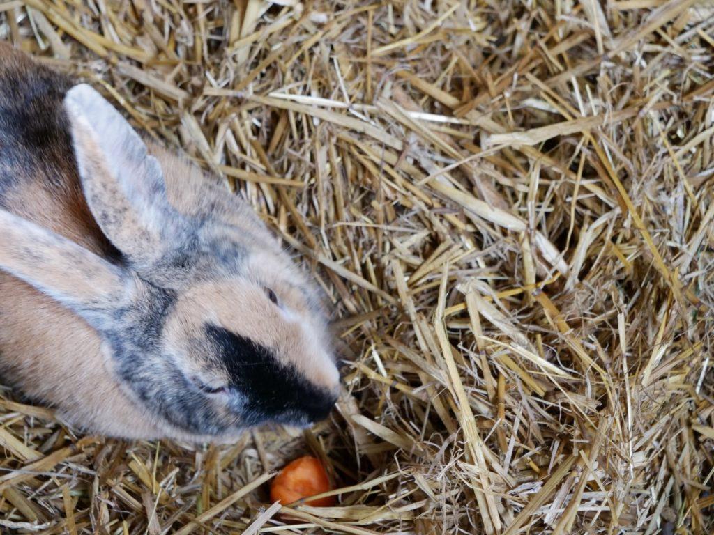 Rabbit Murton Park